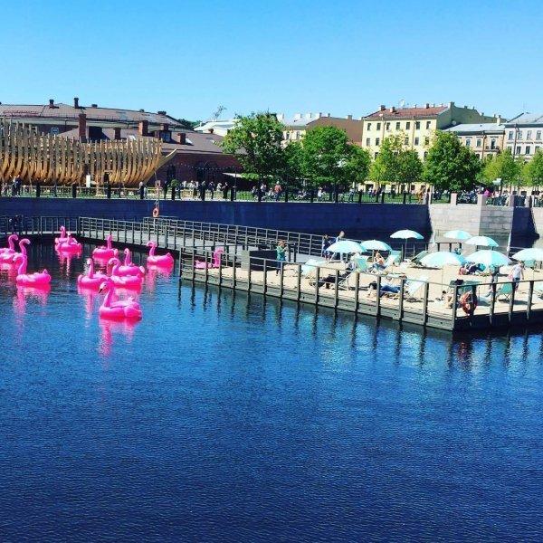 На пляже Петербурга появились фламинго