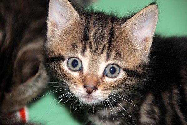«Особенный» котенок: Житель Таганрога продает любимца за миллион рублей