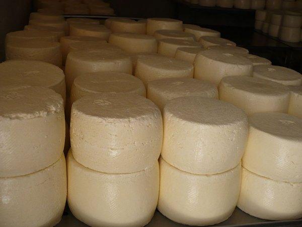 Эксперты выявили антибиотики в составе сыра, произведенного в Ростове