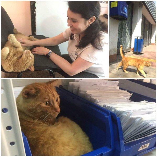 Коты занимают все больше важных должностей. В Омске на почте «работает» кот