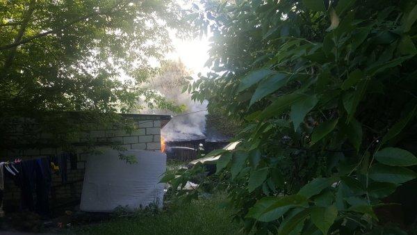 Жители Новгорода боятся сгореть заживо из-за тополиного пуха