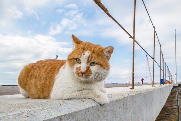 Символ Крымского моста кот Мостик отъедается в Сочи и болеет за Роналду