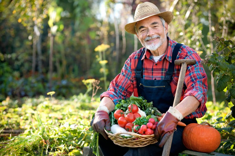 Фермерам разрешили строить дома на сельскохозяйственных землях