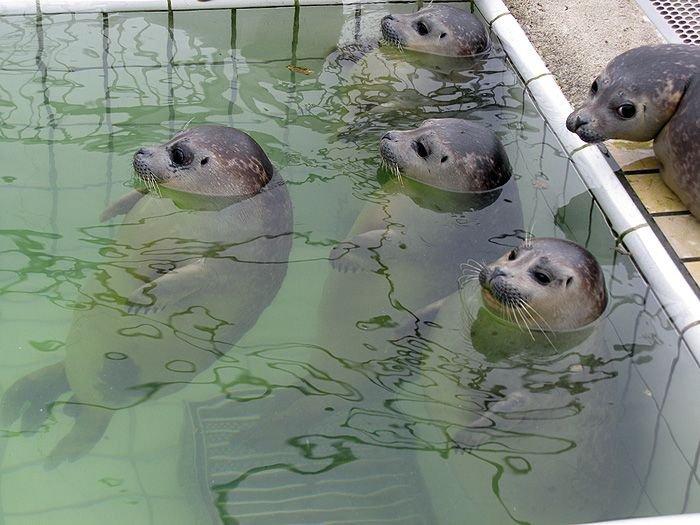 В Московском зоопарке построят павильон для нерп, тюленей и моржей