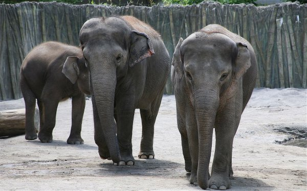 В Ростовском зоопарке слоны спасаются от жары