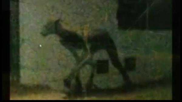 Чудовище, устроившее бойню собак, попало на камеру видеонаблюдения