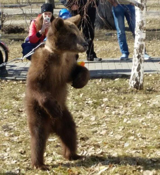 В Хабаровске женщина выгуляла на улице медвежонка и вызвала волну критики