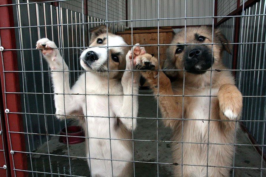 В новой Москве построят приют для животных площадью 10,000 кв м