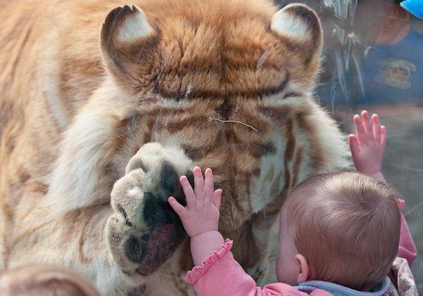 Московский зоопарк готовит «большой проект» по работе с детьми