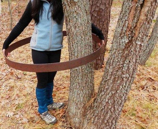 Жительница Индианы обнаружила загадочное литое кольцо, накинутое на дерево
