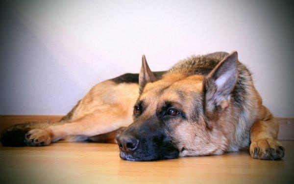 Хатико: В Карелии пес три недели ждет своего хозяина на трассе