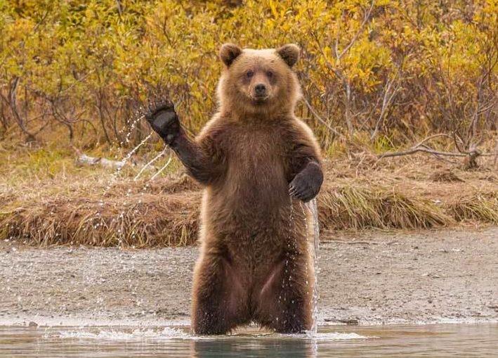 Заповедник с любопытными медведями открыт для посетителей в Сибири