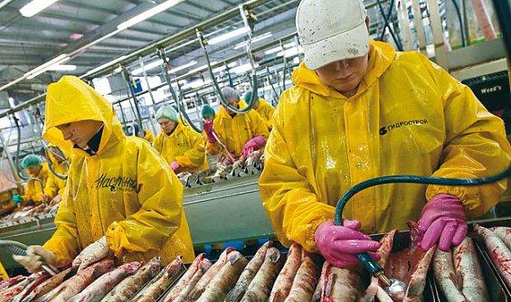 Исландцы строят в России рыбоперерабатывающий завод и делятся технологиями
