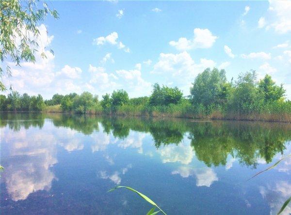 Минприроды: В Ростовской области нет водоемов с чистой водой