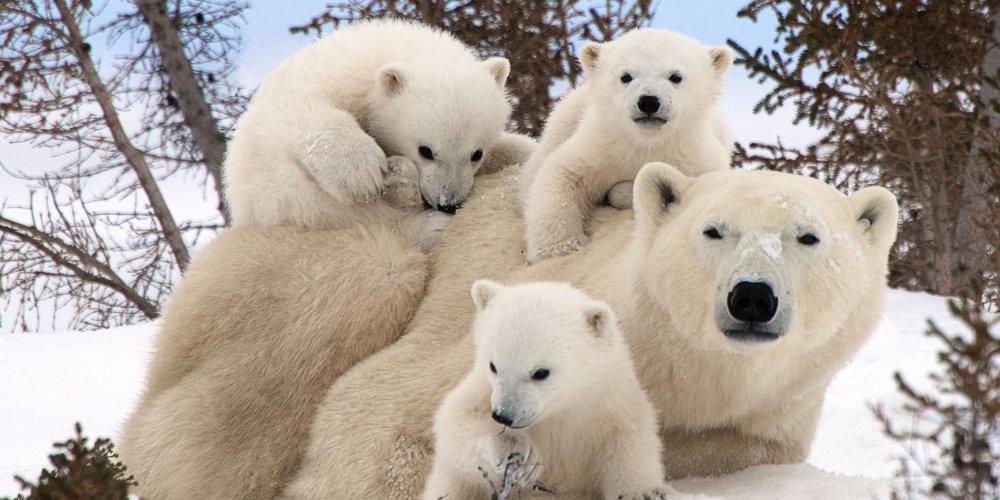 «Белые медведи» станут символом Северного Медведково