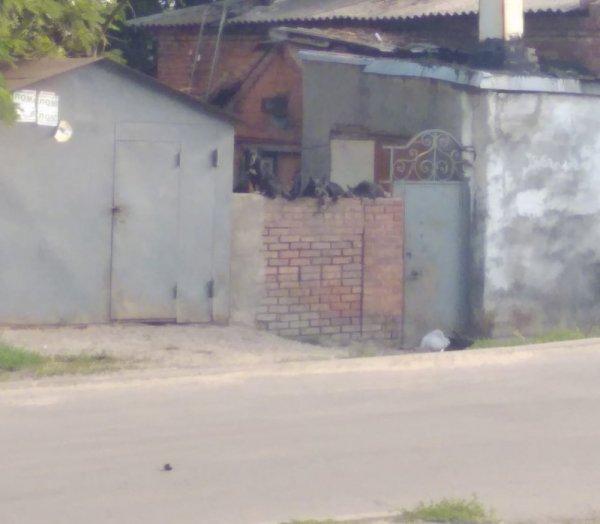 В Ростове вместо кошек на заборах сидят собаки