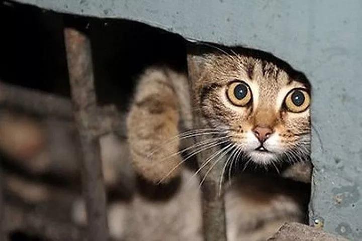 Минстрой утвердил регламент, который спасет миллионы кошек