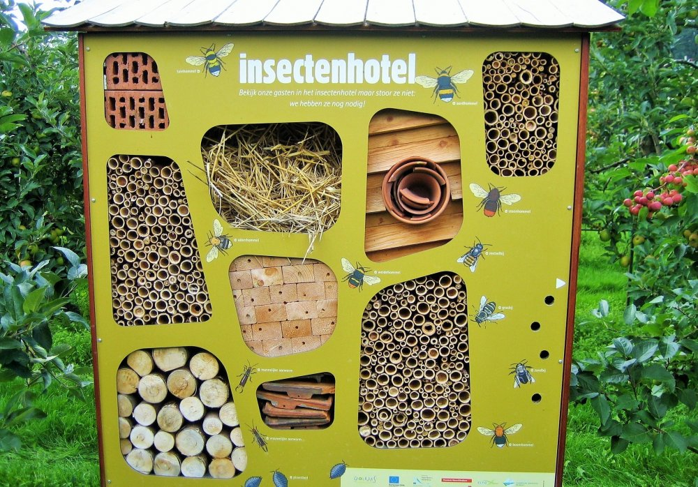 Двухметровый отель для насекомых откроется в Лианозовском парке